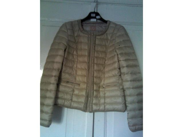 Calliope jaknica